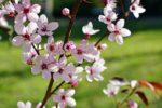 今日2月13日は、春本番の陽気です。