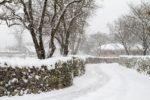今年の冬は雪が多く降りそう?