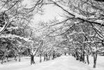 1月12日火曜日雪の予報です。